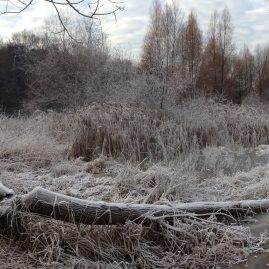 Природа в ноябре — все оттенки серого