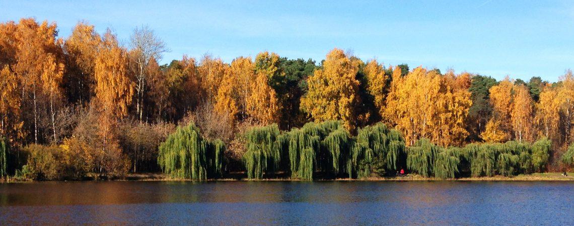Осенний лес в Стрешнево