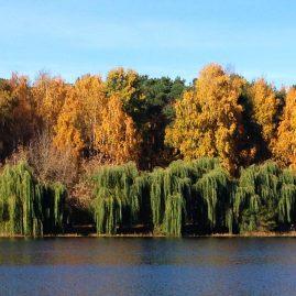 Осенний лес Стрешнево пейзажи природы Альберт Сафиуллин