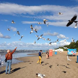 Чайки и ворона пляж Майори пейзажи природы Сафиуллин