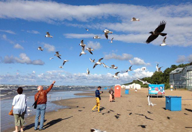Чайки и ворона на пляже Майори