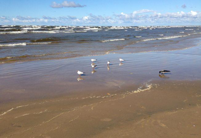 Чайки и ворона на пляже Юрмалы