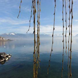 Солнечный февраль Женевское озеро пейзажи природы Сафиуллин