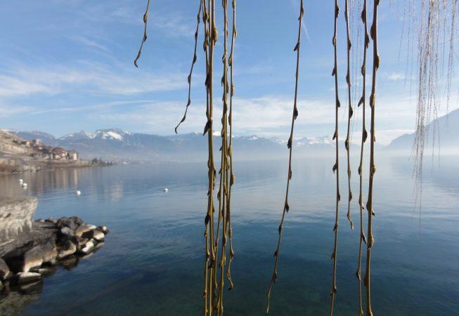 Солнечный февраль на Женевском озере