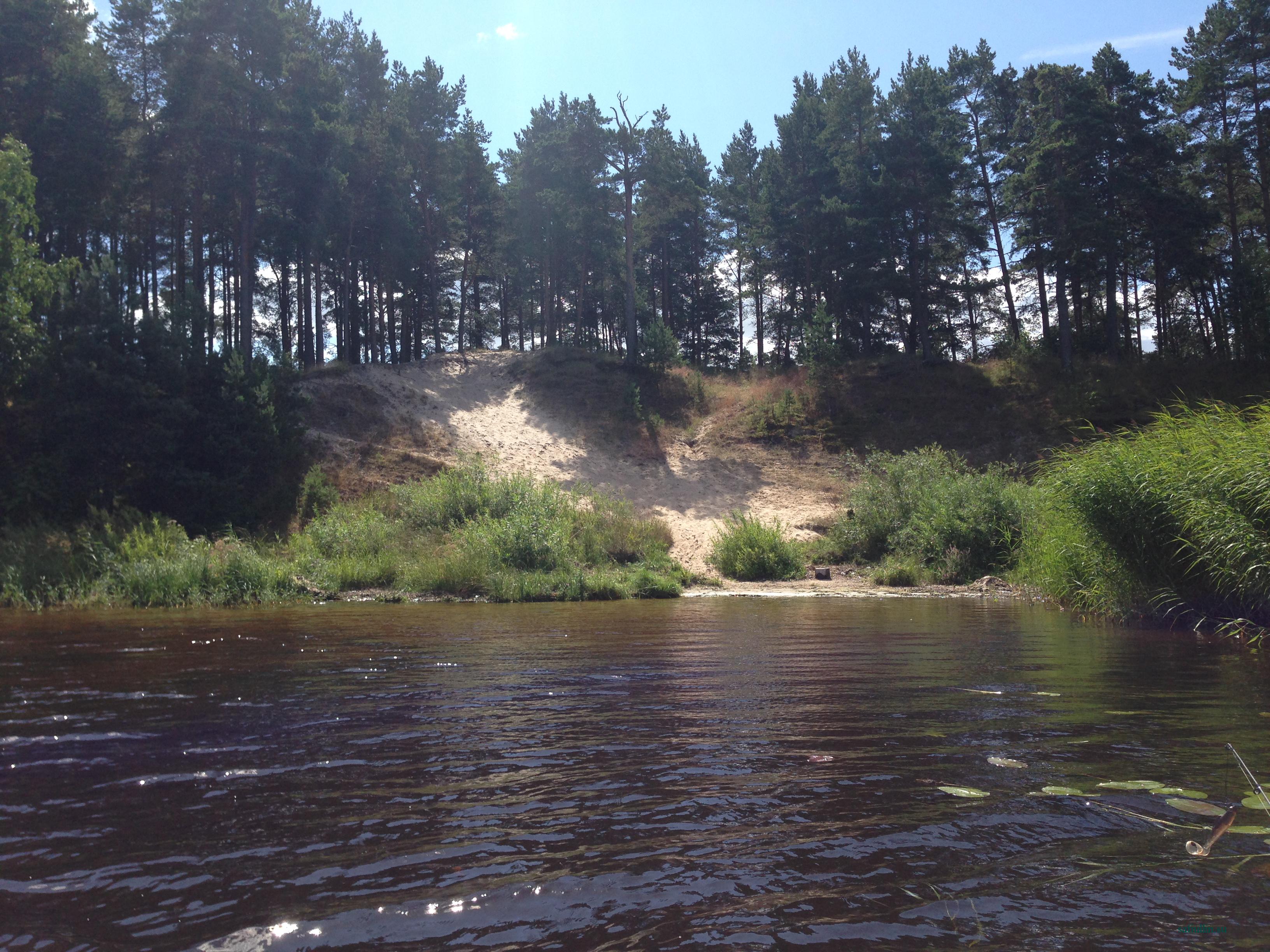 пейзажи природы альберт сафиуллин лето река лиелупе юрмала