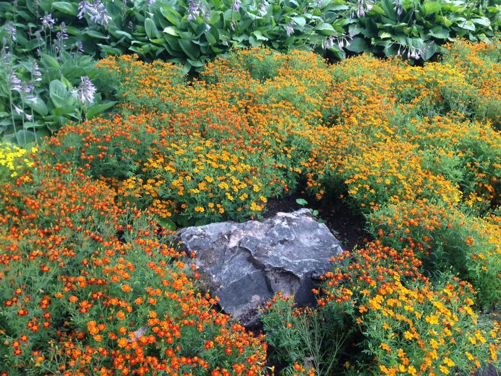 пейзажи природы альберт сафиуллин лето цветы рига