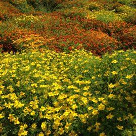 пейзажи природы альберт сафиуллин лето цветы юрмала