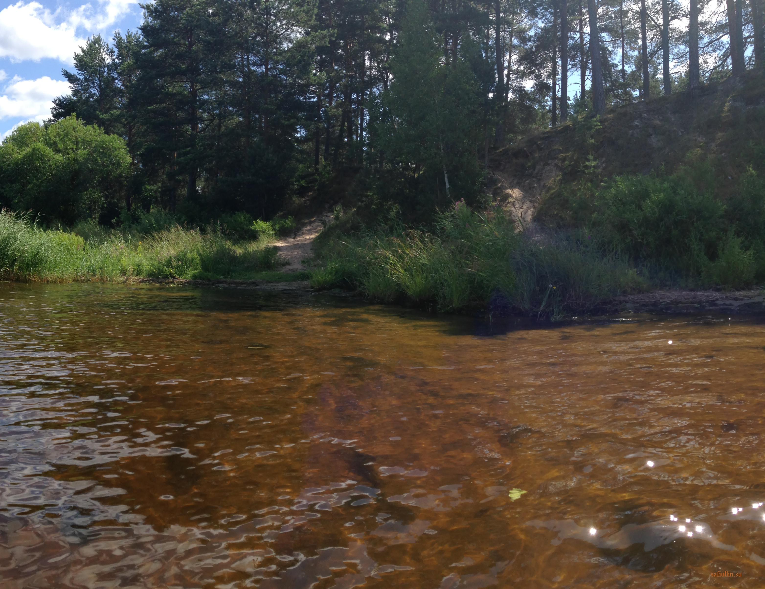 пейзажи природы альберт сафиуллин лето река лиелупе