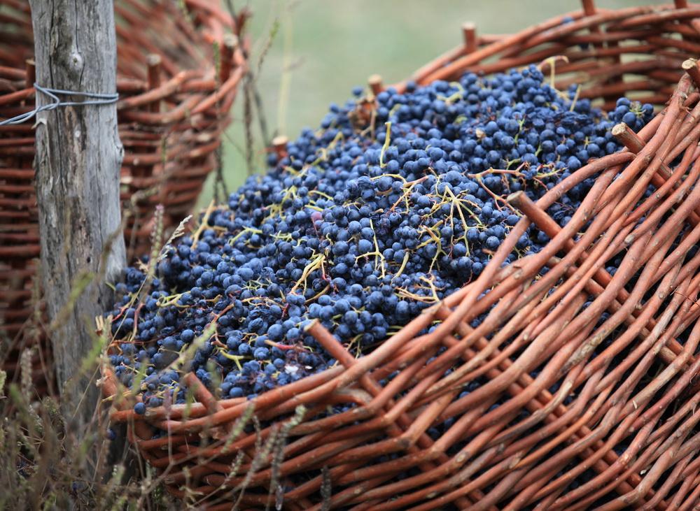 Грузинское вино квеври виноград саперави Альберт Сафиуллин