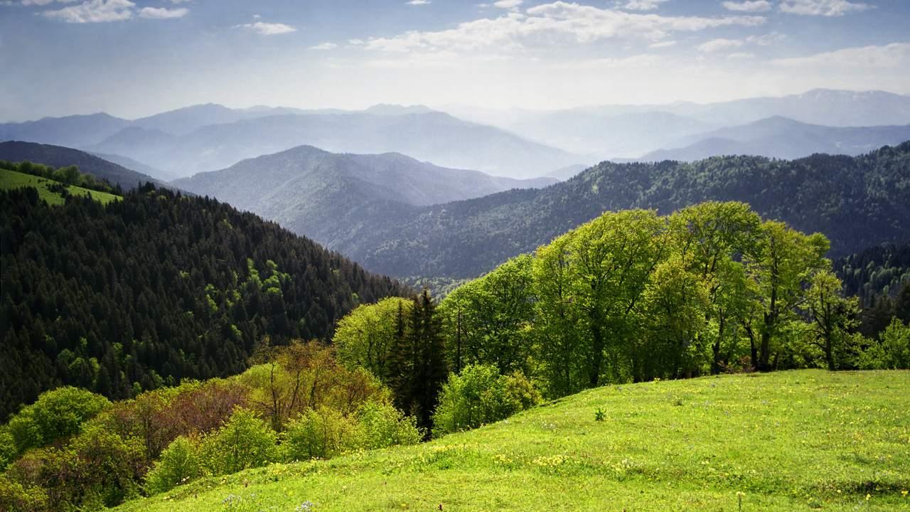 Грузинсоке вино квеври киндзмараули Рача Лечхуми Альберт Сафиуллин