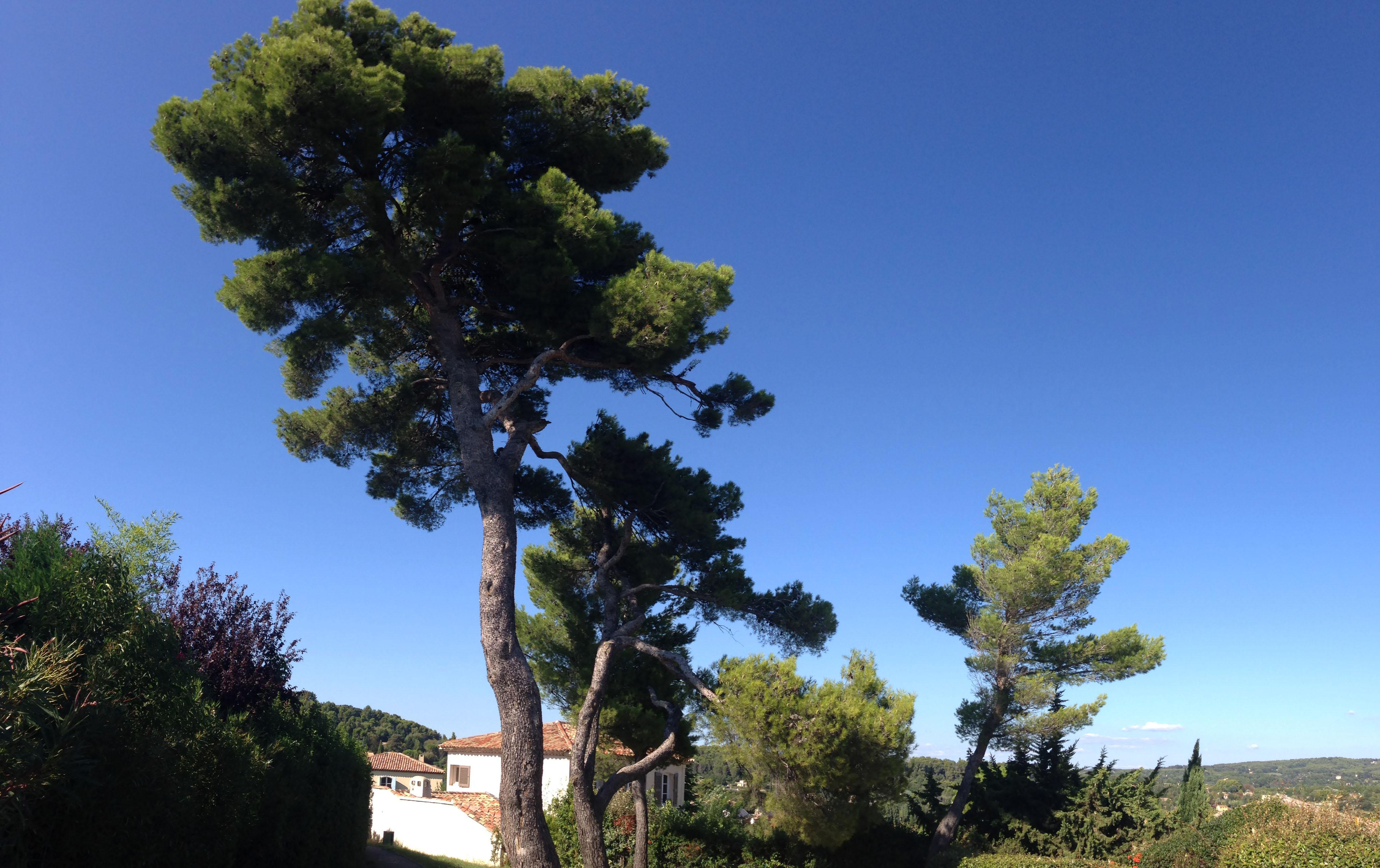 Пейзажи природы Поль Сезанн картины гора Сент Викутар Альберт Сафиуллин