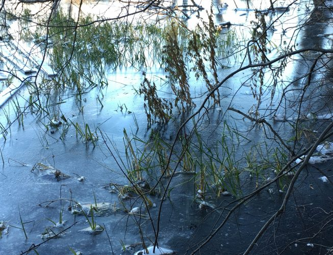 Первый лед на реке сковал зеленые кустарники.