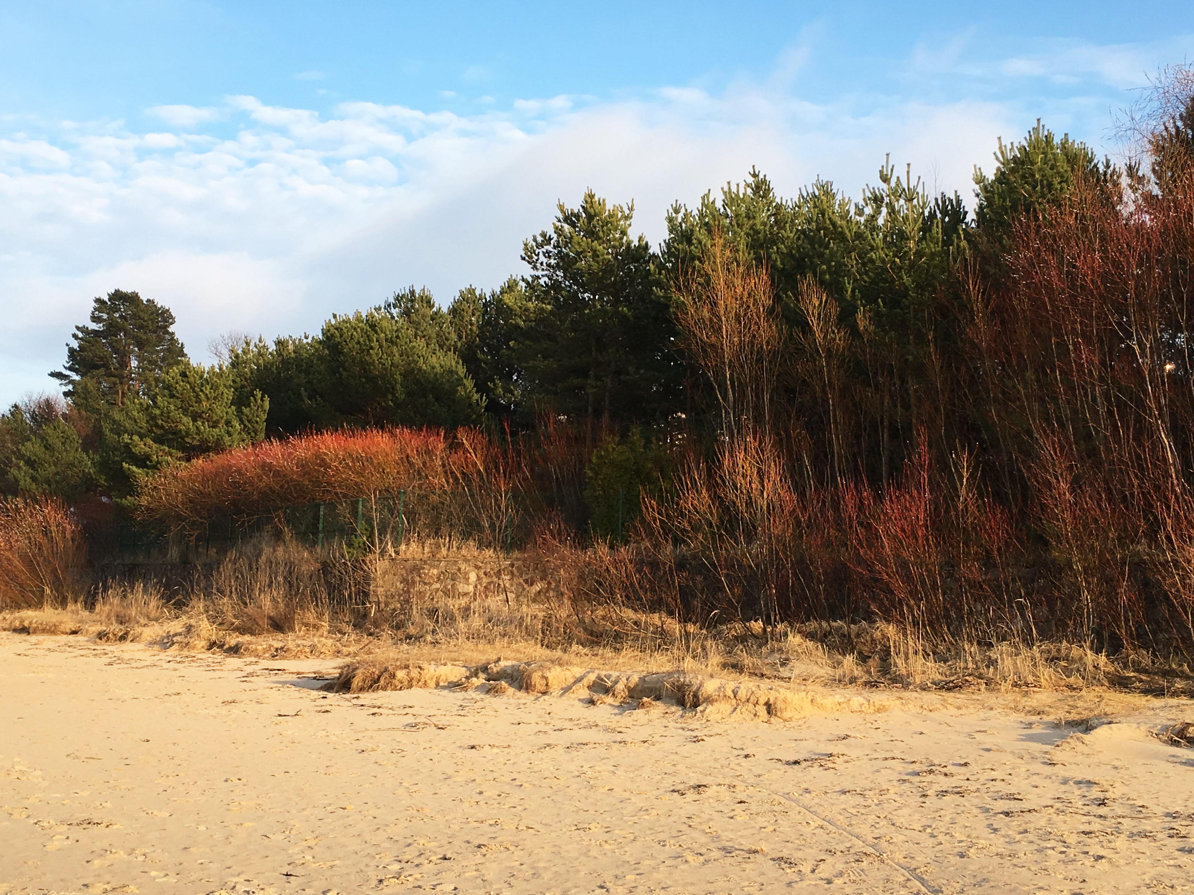 Латвия Юрмала Весна Дюны морской пейзаж крски природы Альберт Сафиуллин