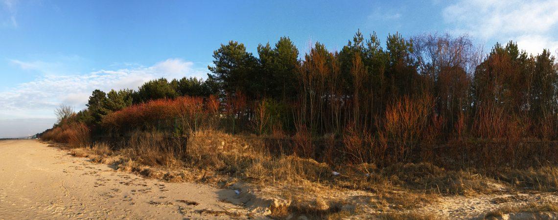 Краски дюн в марте. Юрмала.