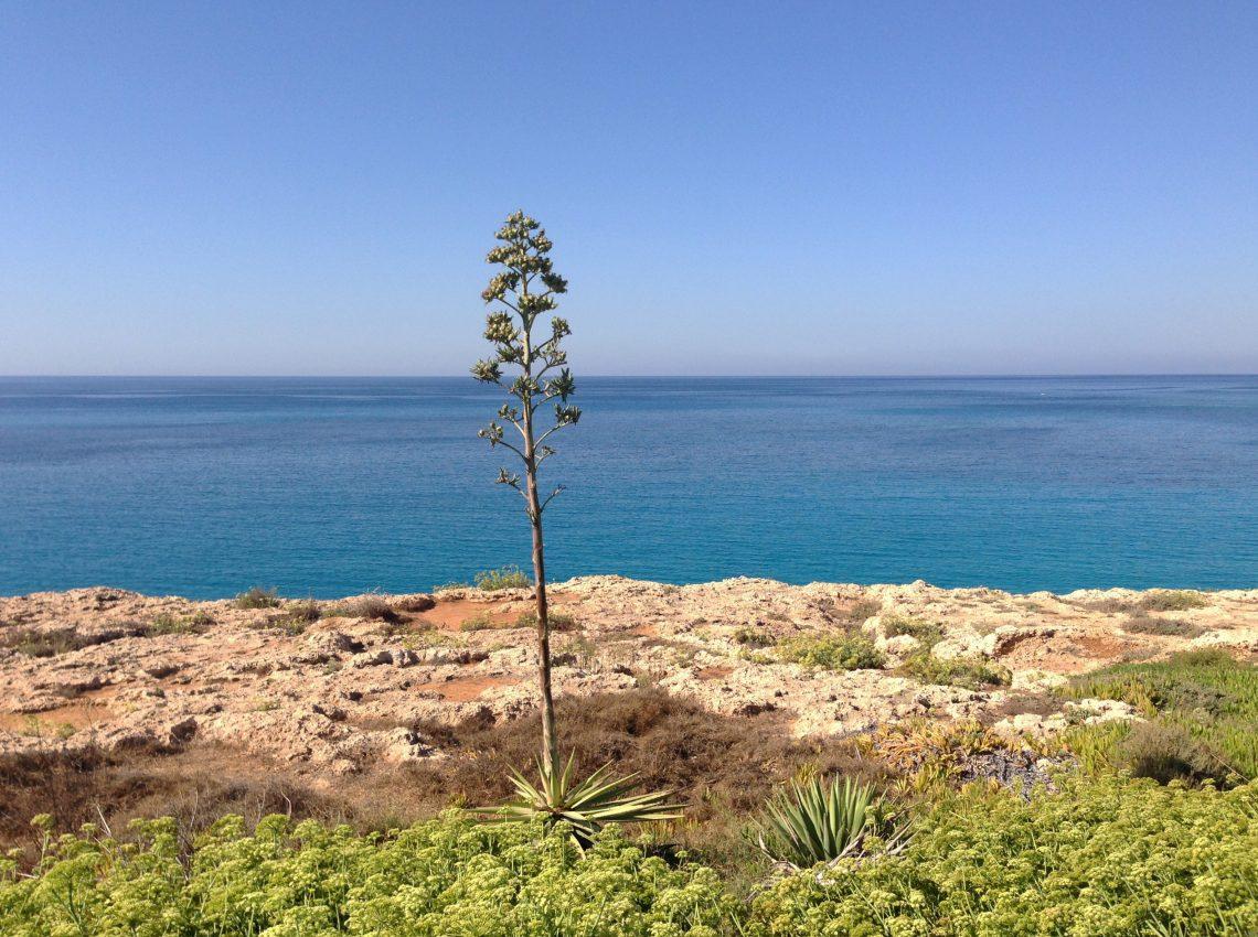 Одинокое дерево. Восточный Кипр.