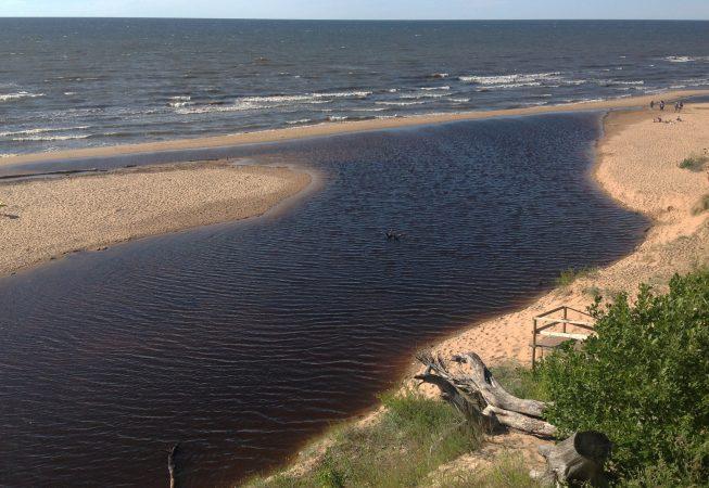 Большая дюна. Саулкрасты. Латвия