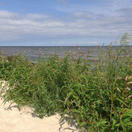 Латвия море Рагациемс пейзажи природы Альберт Сафиуллин