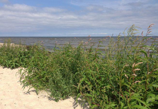 Море. Рагациемс. Латвия