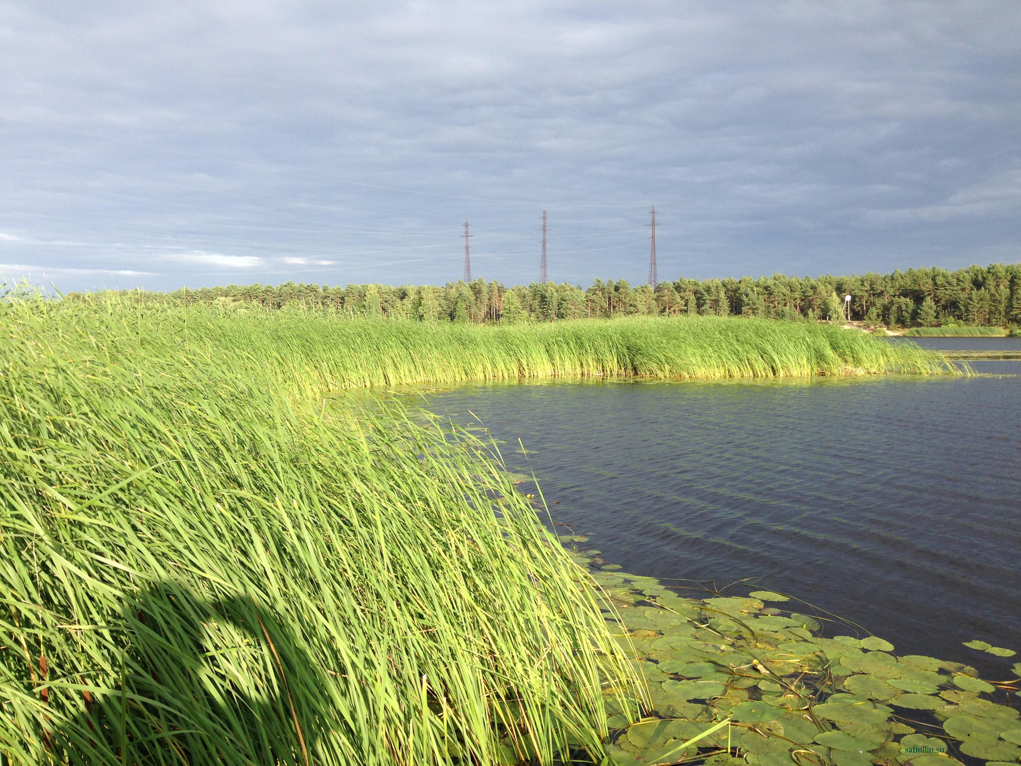 ыбалка в июле Юрмала река Лиелупе пейзажи природы Альберт Сафиуллин