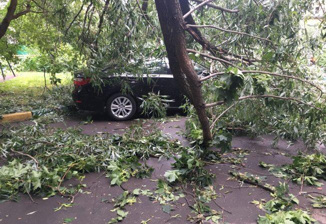 Городской пейзаж грозовой шторм 13 июля 2016 года поваленные деревья поврежденный автомобиль Москва Альберт Сафиуллин