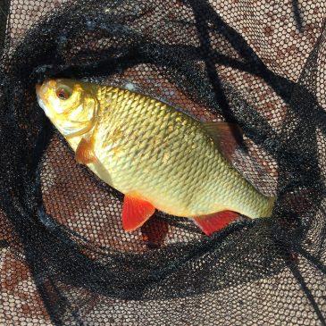 Рыбалка в июле Юрмала река Лиелупе пейзажи природы Альберт Сафиуллин
