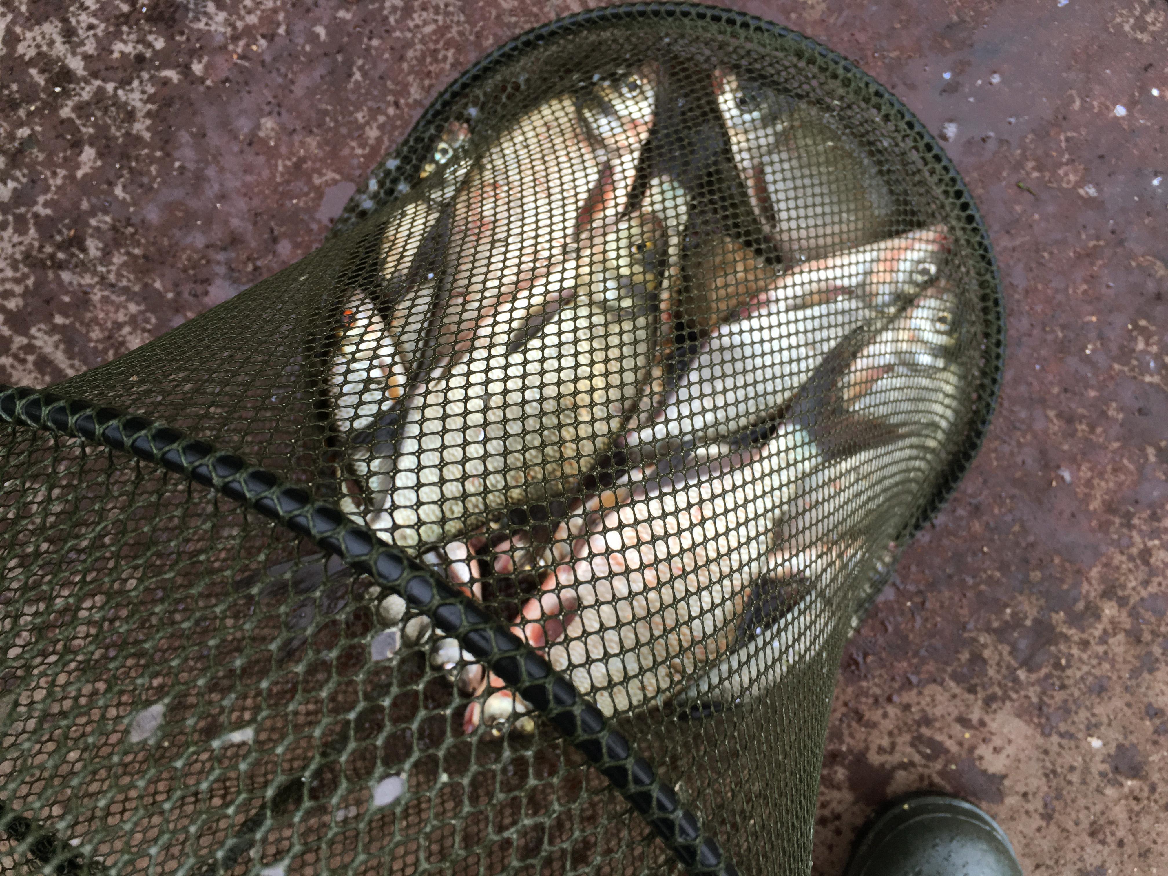 Рыбалка в июле пейзажи природы Альберт Сафиуллин