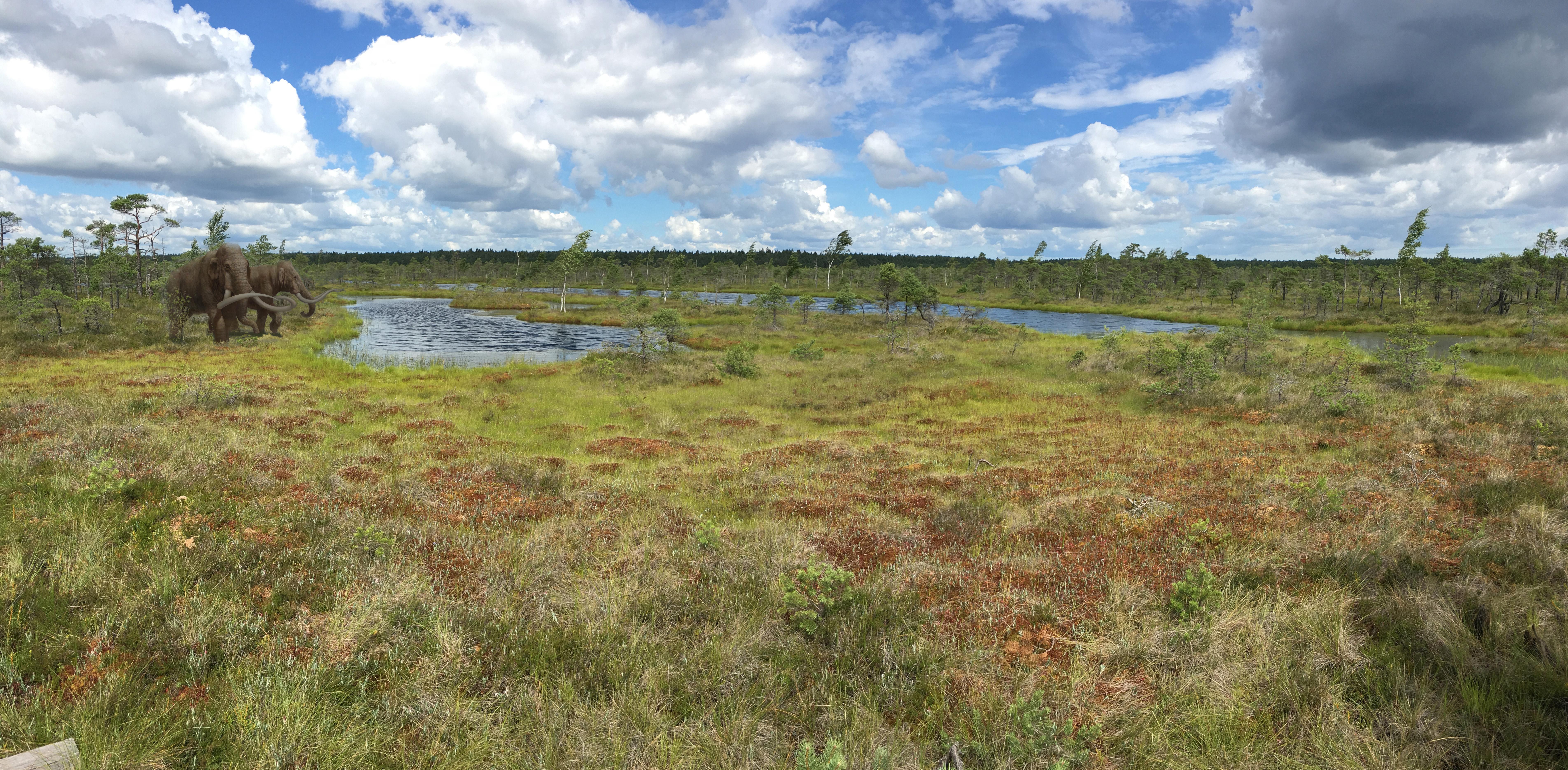 Болото Кемери Латвия Юрмала цвета краски пейзажи природы художник Альберт Сафиуллин