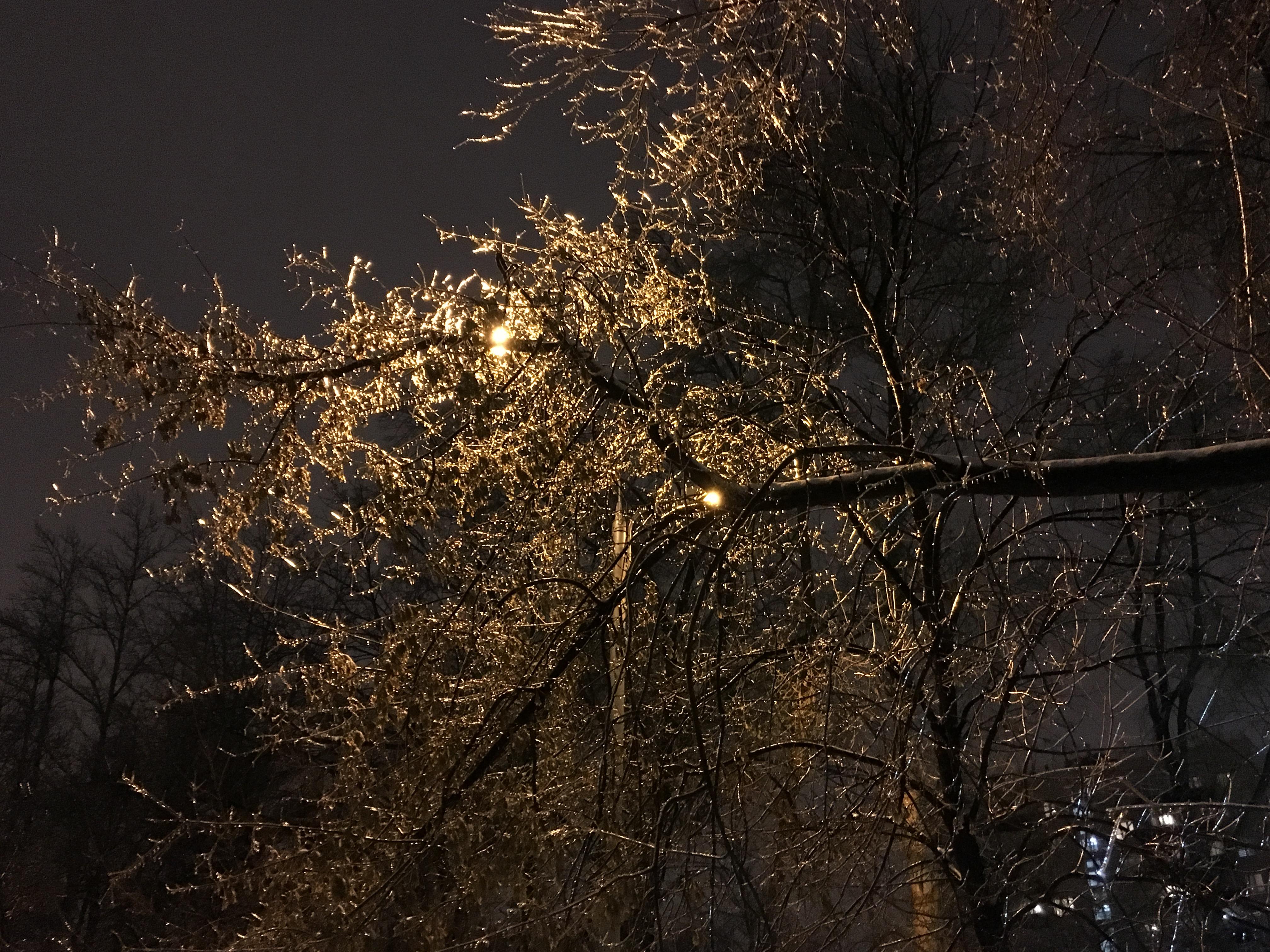 Ледяной дождь Москва стеклянные деревья пейзажи природы Альберт Сафиуллин