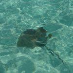 морской пейзаж акула риф лагуна Мальдивы океан подводный мир художник Альберт Сафиуллин
