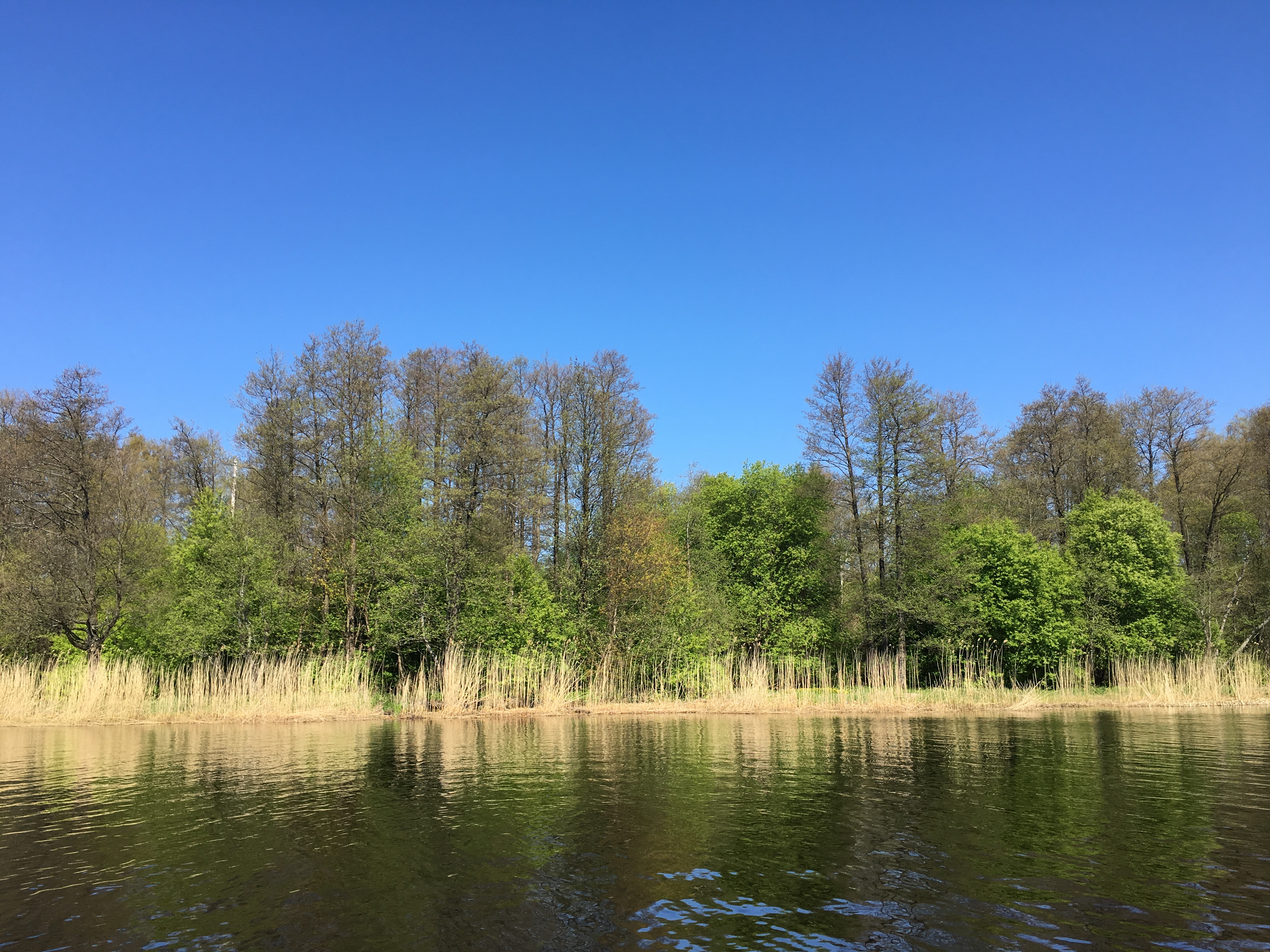 Рыбалка небо лес лещ май речной пейзаж юрмала лиелупе пейзажи природы Альберт Сафиуллин