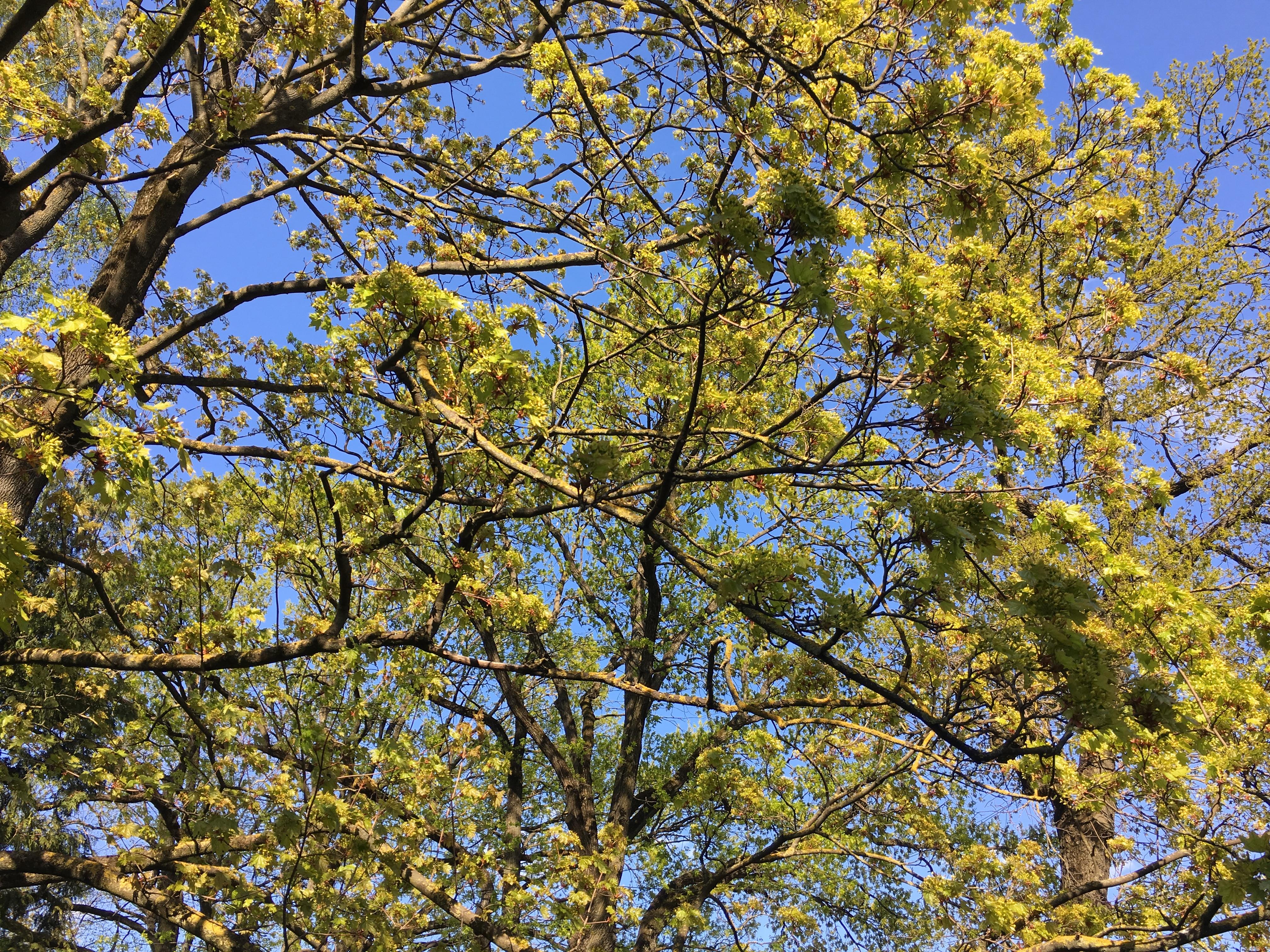 Рыбалка небо дерево лещ май речной пейзаж юрмала лиелупе пейзажи природы Альберт Сафиуллин
