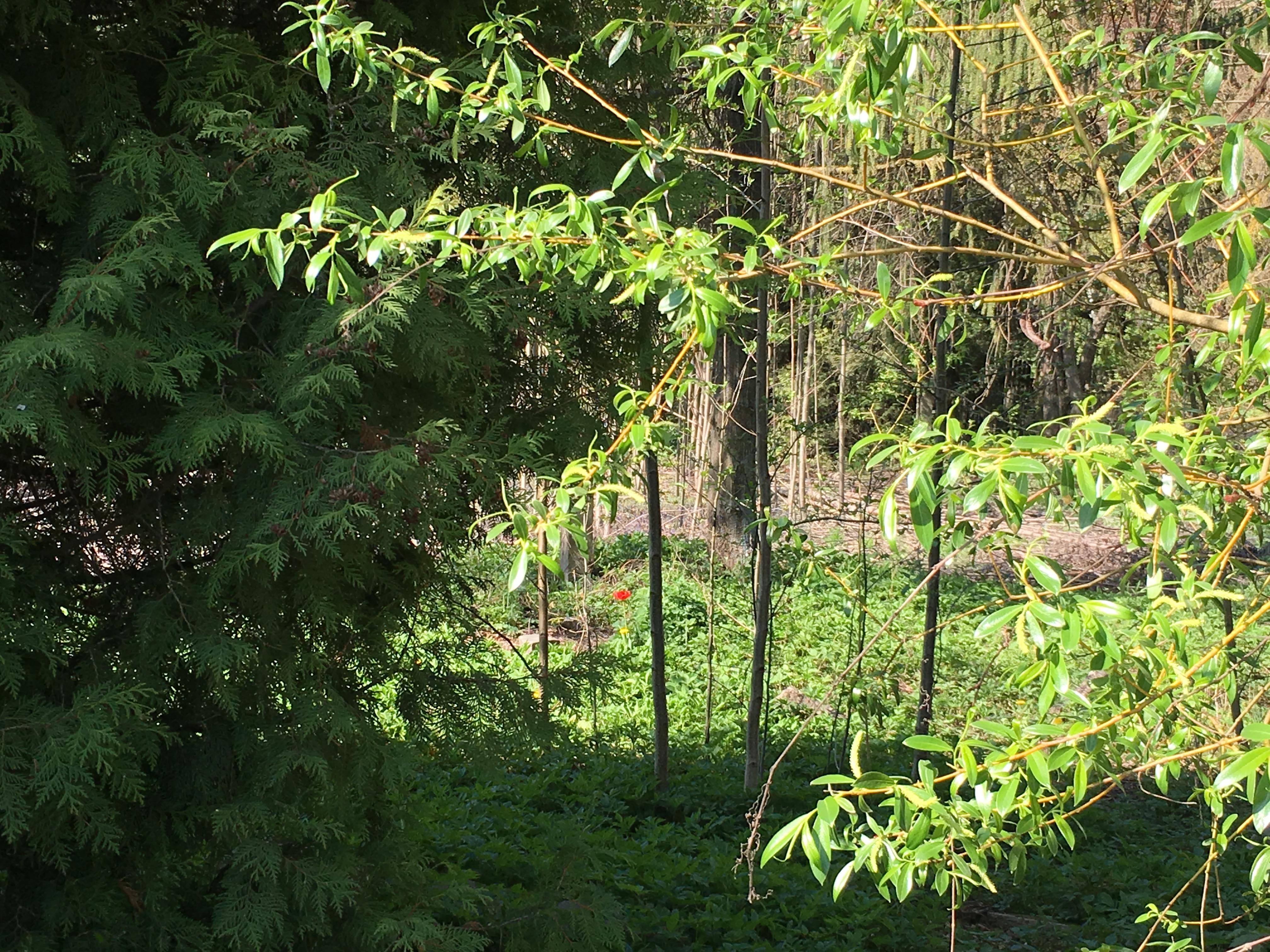 Рыбалка небо лес аленький цветок май речной пейзаж юрмала лиелупе пейзажи природы Альберт Сафиуллин