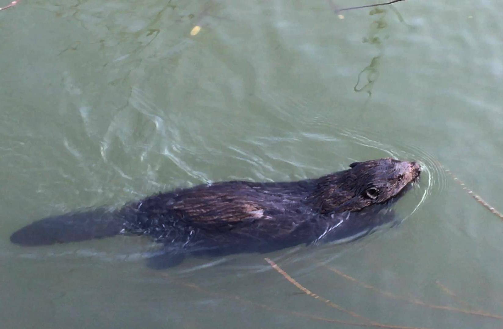 Рыбалка лещ бобры май речной пейзаж юрмала лиелупе пейзажи природы Альберт Сафиуллин