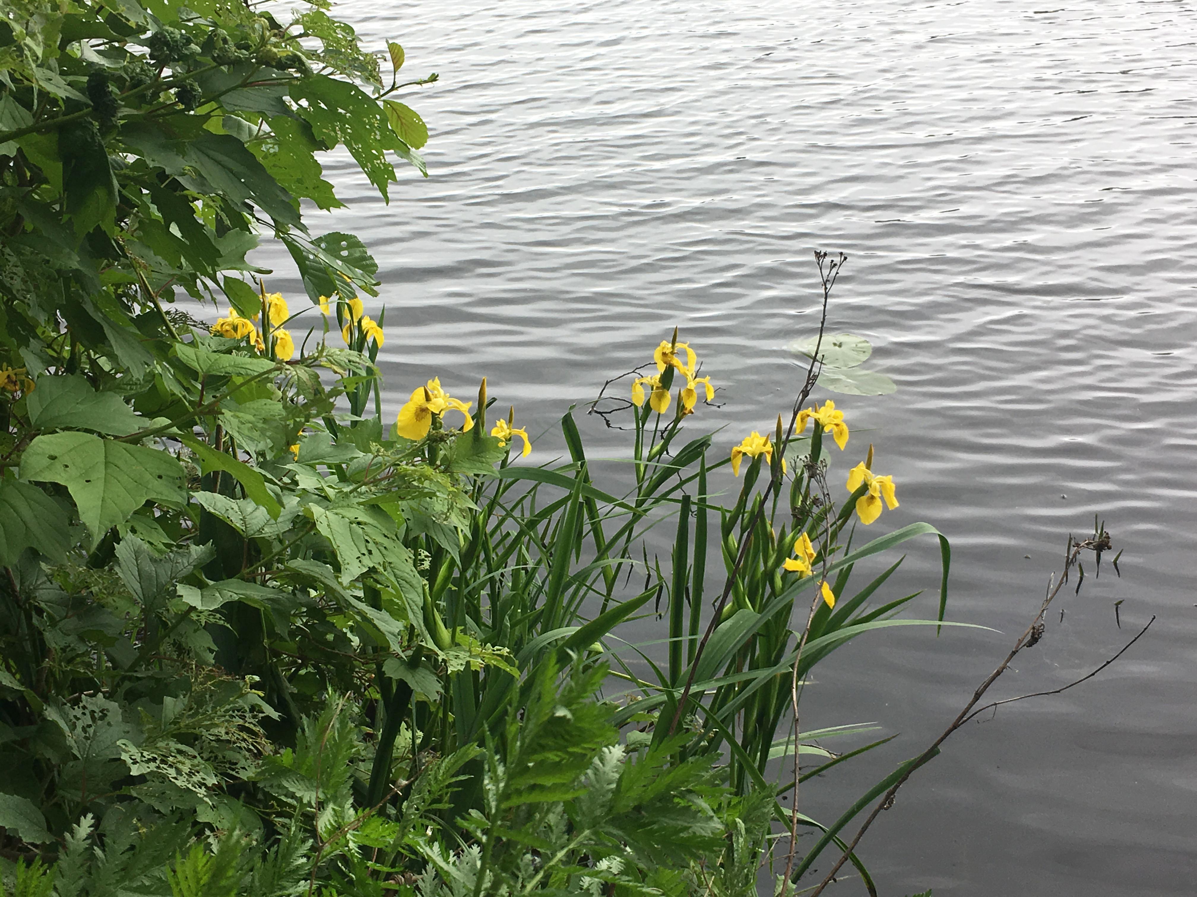 Река Цна Сасово летняя рыбалка рыба июнь пейзажи природы Альберт Сафиуллин