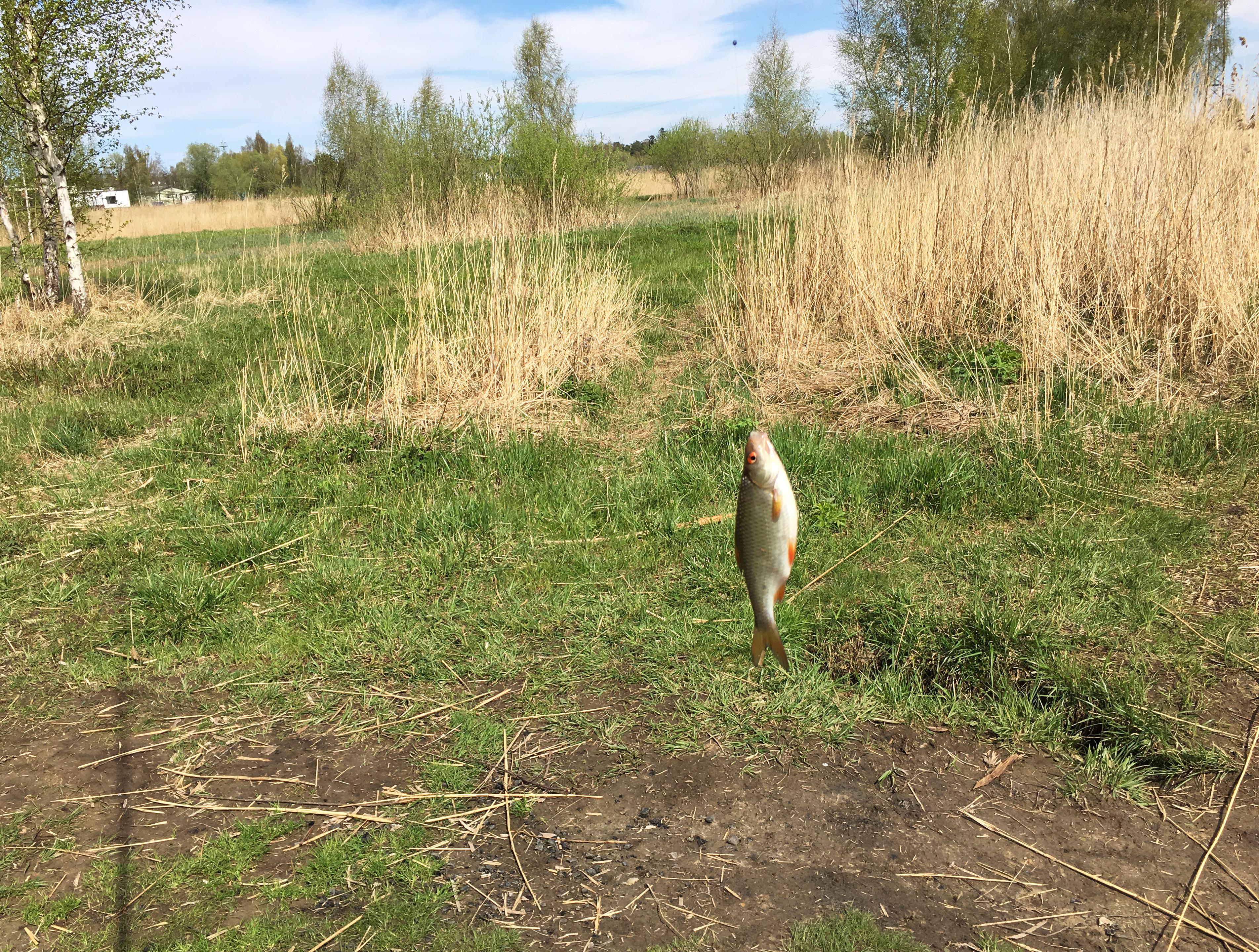рыбалка Юрмала Латвия Лиелупе пейзажи природы плотва Альберт Сафиуллин Albert Safiullin