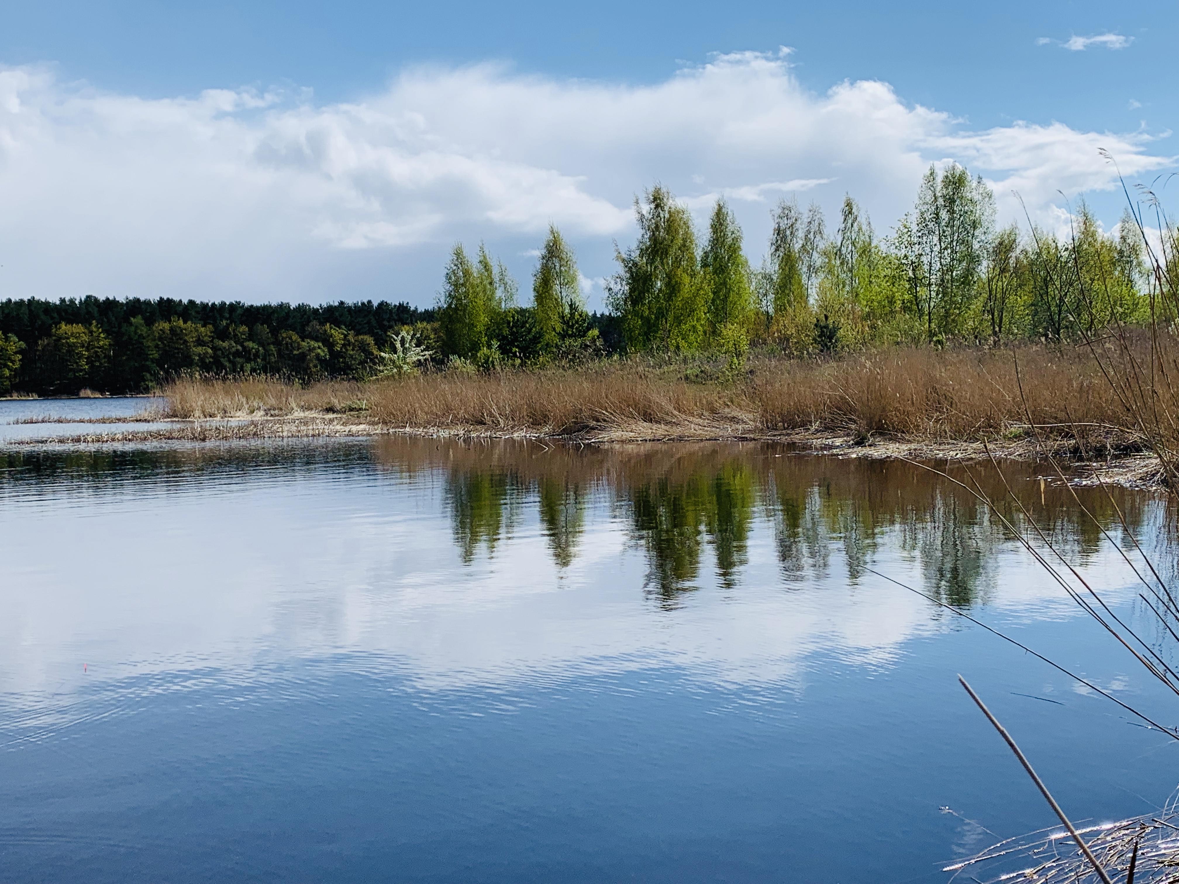 рыбалка река Лиелупе Латвия Lielupe пейзажи природы май лещ Альберт Сафиуллин