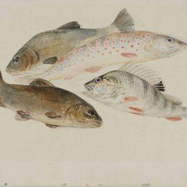 Уильям Тёрнер — два линя, форель и окунь