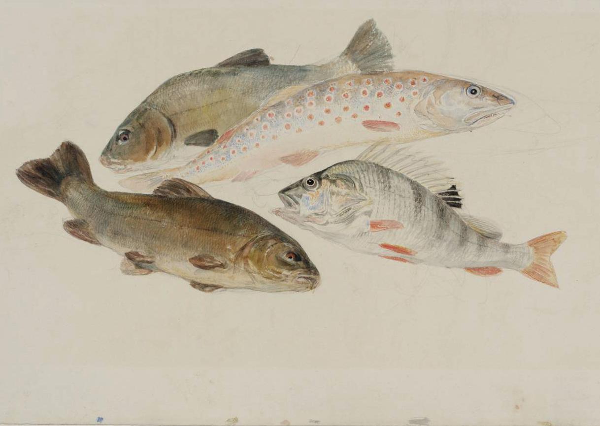 художник Уильям Тёрнер рисунок Этюд с рыбами: два линя, форель и окунь акварель пейзажи природы Альберт Сафиуллин