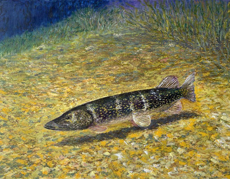 щука рыба картина масляная пастель пейзажи природы художник Альберт Сафиуллин