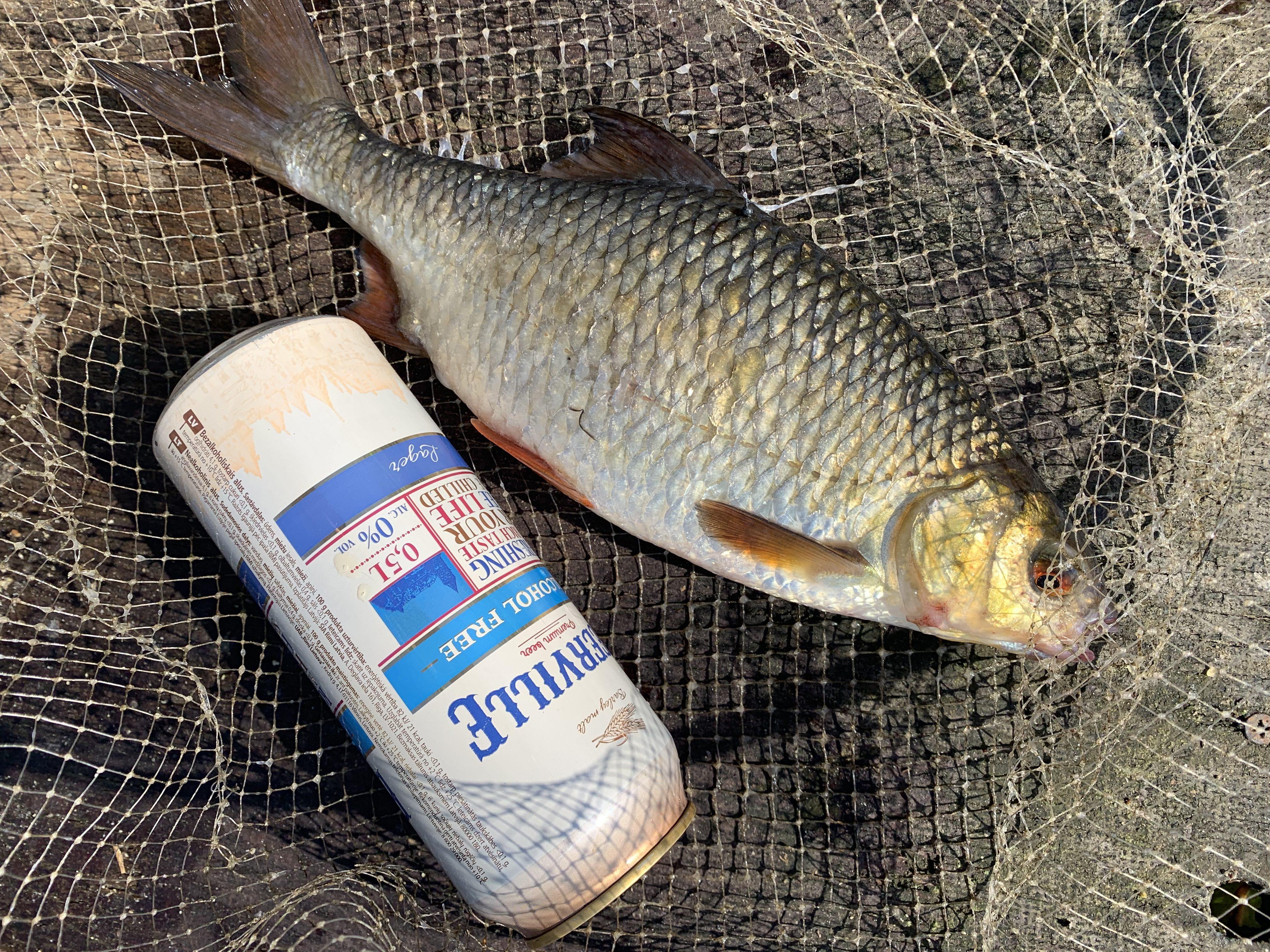 рыбалка ловля крупной плотвы в сентябре на удочку Лиелупе пейзажи природы Альберт Сафиуллин