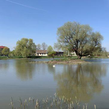 по дорогу в Кулдигу Латвия пруд лебеди пейзажи природы Альберт Сафиуллин